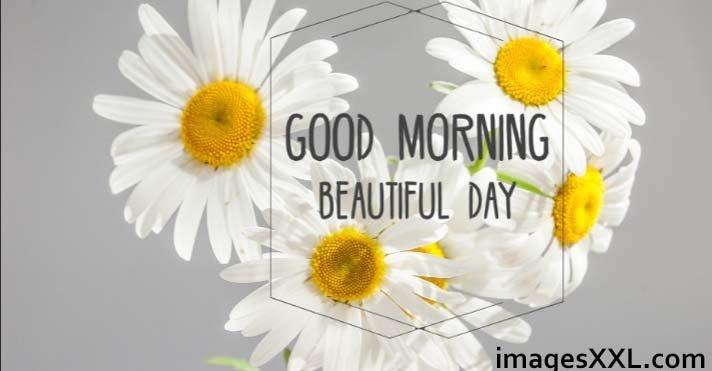 Good Morning white flowers