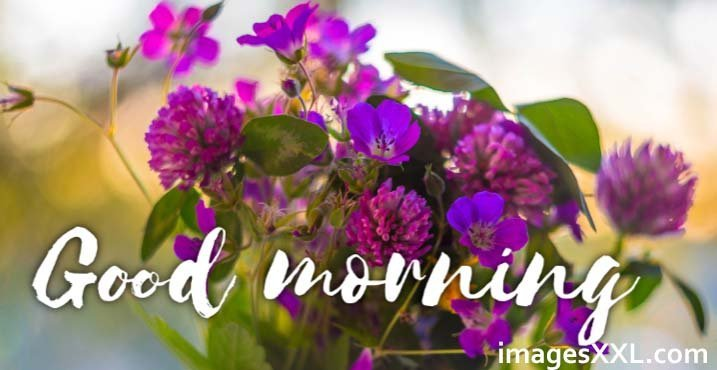 Violet Colour Flowers Good Morning Images | Roses Gallery
