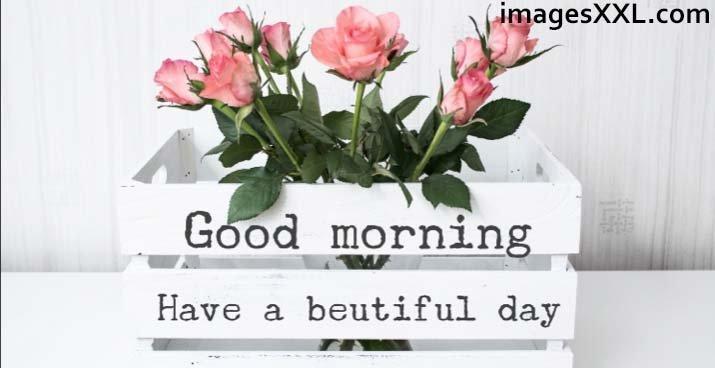 Good Morning beautiful flowers