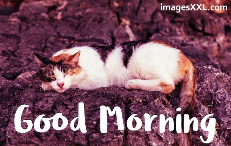 Good morning sweet cat