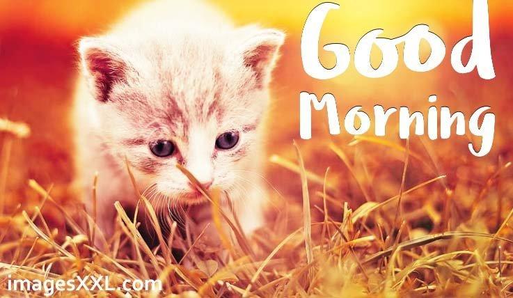 Good morning kitten