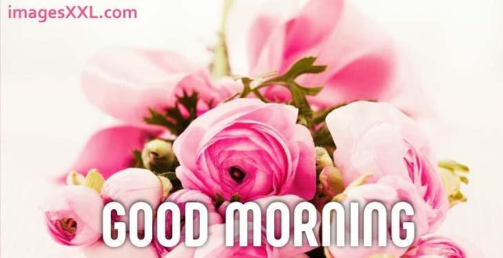 Good morning roses