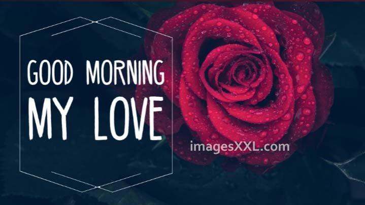 Good morning love roses