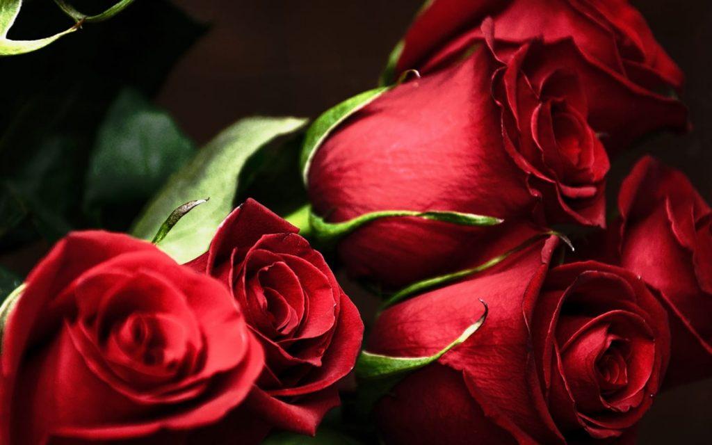 Roses HD