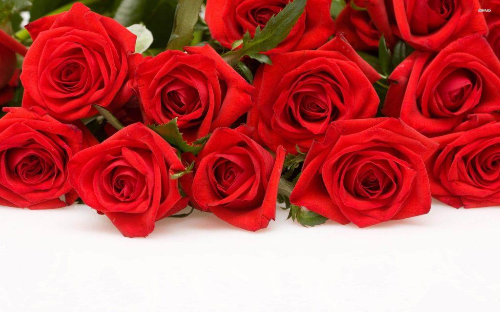10 red Rose