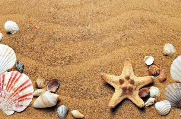 starfish and shells at beach