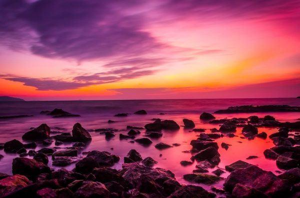 Sunrise Sea violet